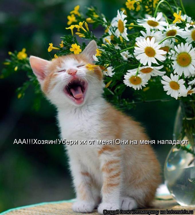 Котоматрица: ААА!!!Хозяин!Убери их от меня!Они на меня нападают