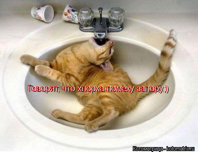Котоматрица: Говорят, что хлорка помеху запору;) Говорят, что хлорка помеху запору;)