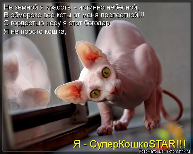 Котоматрица: Не земной я красоты - истинно небесной,  В обмороке все коты от меня прелестной!!! С гордостью несу я этот богодар, Я не просто кошка,  Я - Супер