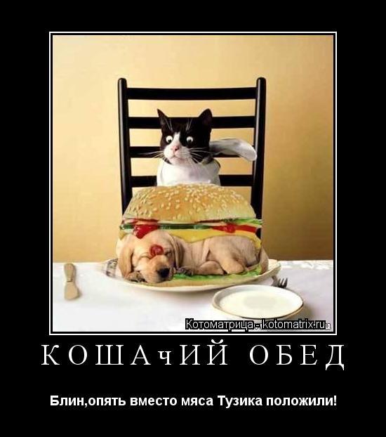 Котоматрица: Кошачий обед Блин,опять вместо мяса Тузика положили!