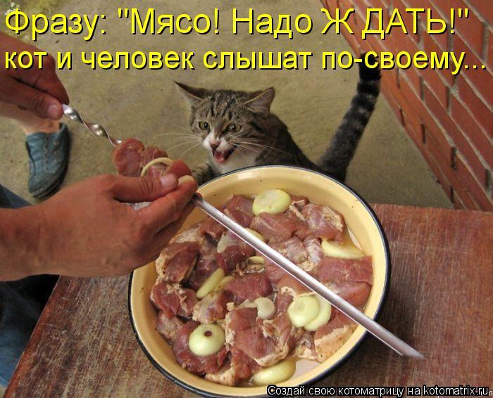 """Котоматрица: Фразу: """"Мясо! Надо Ж ДАТЬ!"""" кот и человек слышат по-своему..."""