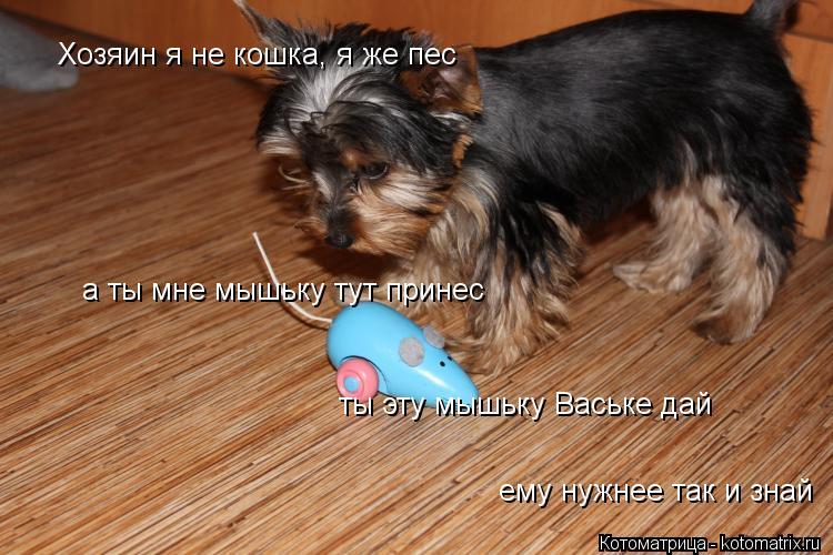 Котоматрица: ты эту мышьку Ваське дай а ты мне мышьку тут принес Хозяин я не кошка, я же пес  ему нужнее так и знай