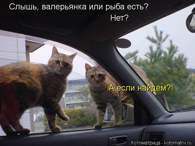 Котоматрица: Слышь, валерьянка или рыба есть? Нет? А если найдём?!