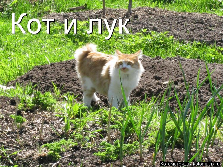 Котоматрица: Кот и лук