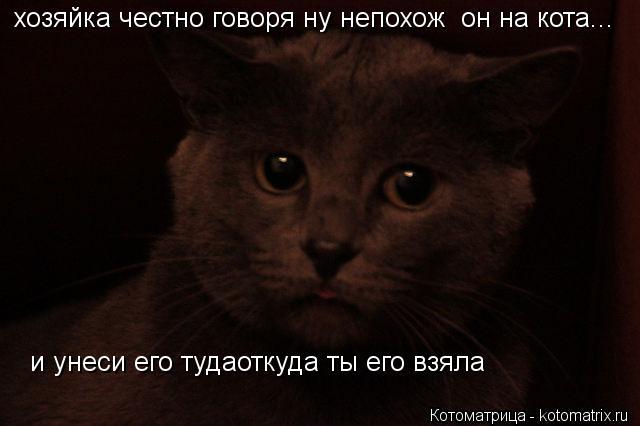 Котоматрица: хозяйка честно говоря ну непохож  он на кота...  и унеси его тудаоткуда ты его взяла