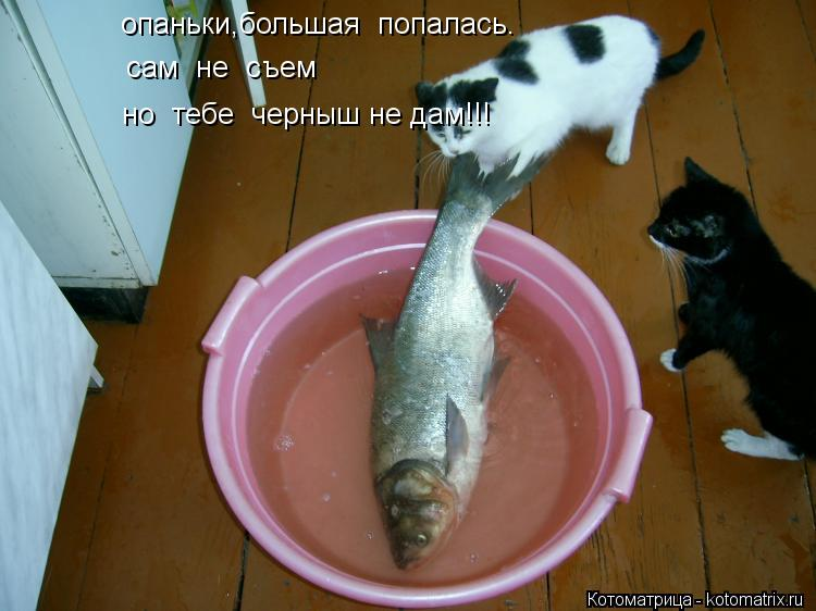 Котоматрица: опаньки,большая  попалась. сам  не  съем но  тебе  черныш не дам!!!