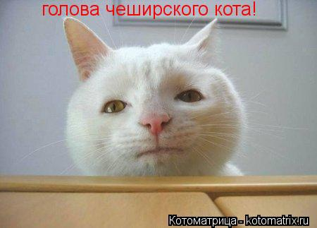 Котоматрица: голова чеширского кота!