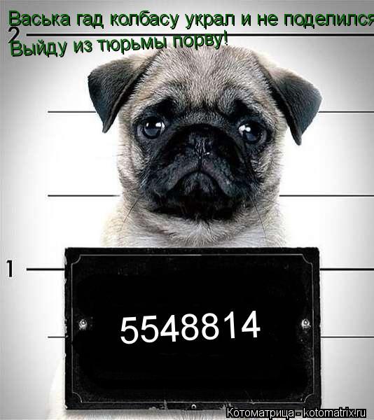 Котоматрица: Васька гад колбасу украл и не поделился! Выйду из тюрьмы порву! 5548814