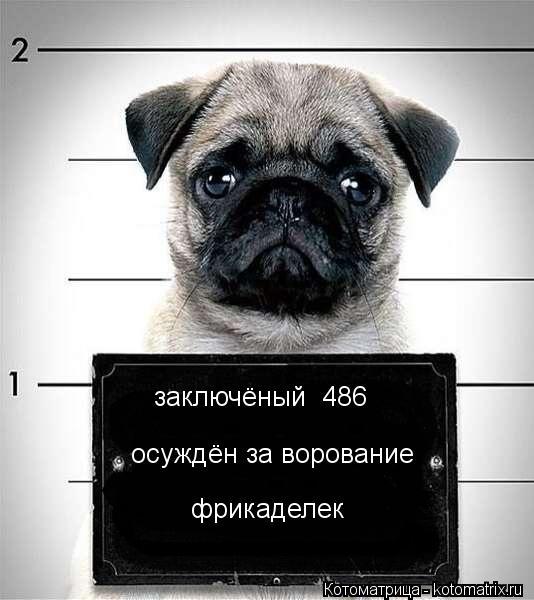 Котоматрица: заключёный №486 осуждён за ворование фрикаделек