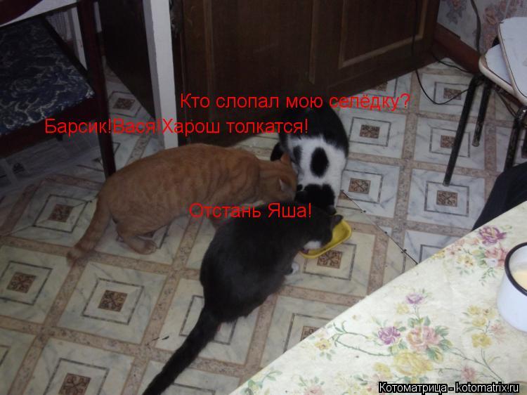 Котоматрица: Барсик!Вася!Харош толкатся! Отстань Яша! Кто слопал мою селёдку?