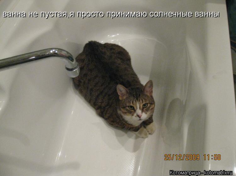 Котоматрица: ванна не пустая,я просто принимаю солнечные ванны ванна не пустая,я просто принимаю солнечные ванны