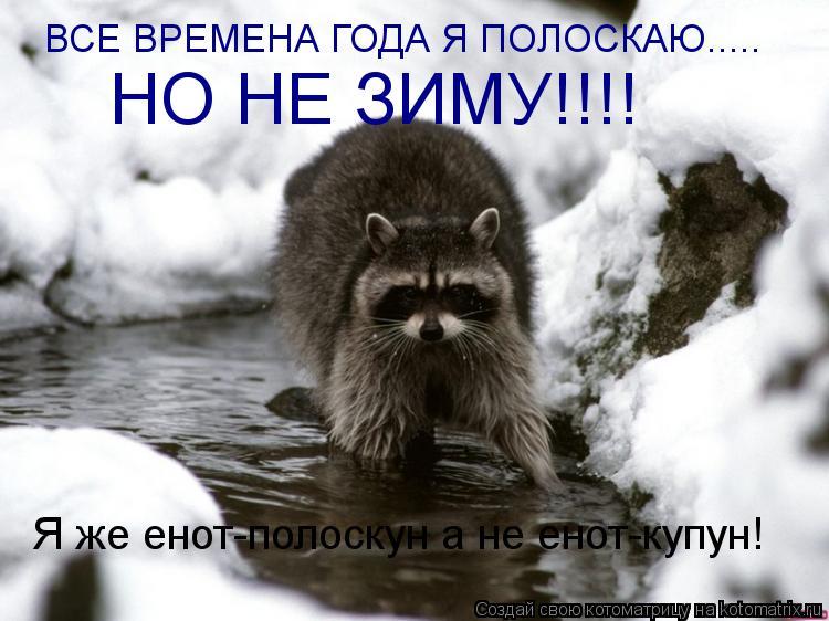 Котоматрица: ВСЕ ВРЕМЕНА ГОДА Я ПОЛОСКАЮ..... НО НЕ ЗИМУ!!!! Я же енот-полоскун а не енот-купун!