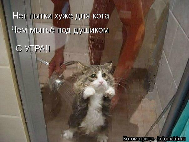 Котоматрица: Нет пытки хуже для кота Чем мытьё под душиком С УТРА!!