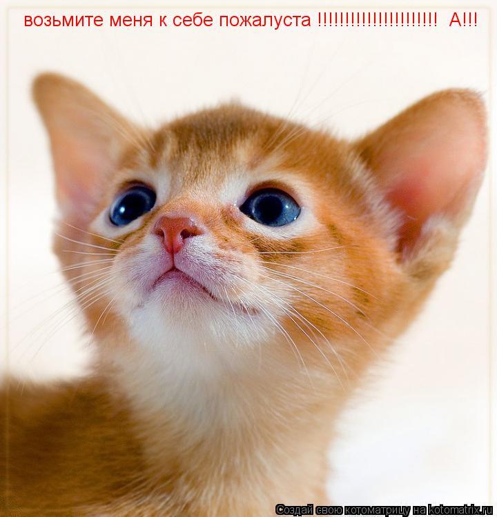 Котоматрица: возьмите меня к себе пожалуста !!!!!!!!!!!!!!!!!!!!!!  А!!!