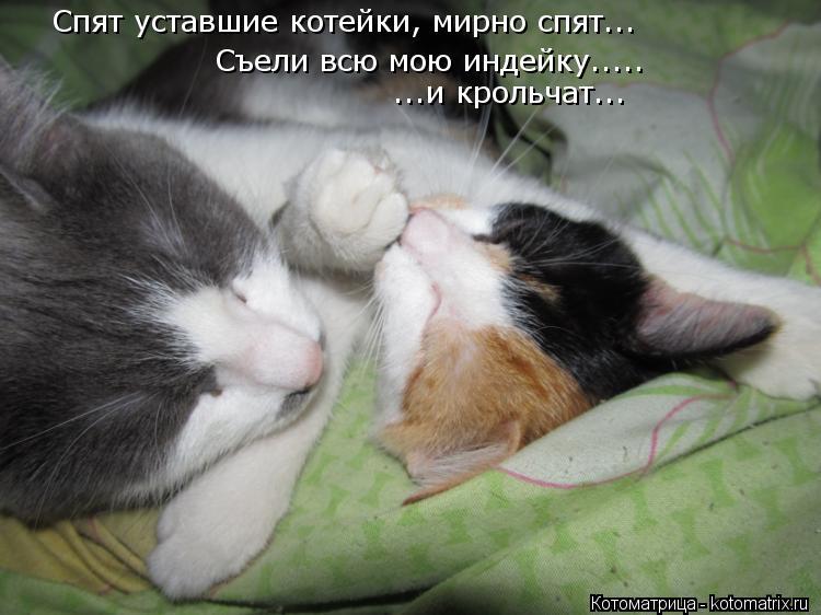 Котоматрица: Спят уставшие котейки, мирно спят... Съели всю мою индейку..... ...и крольчат...