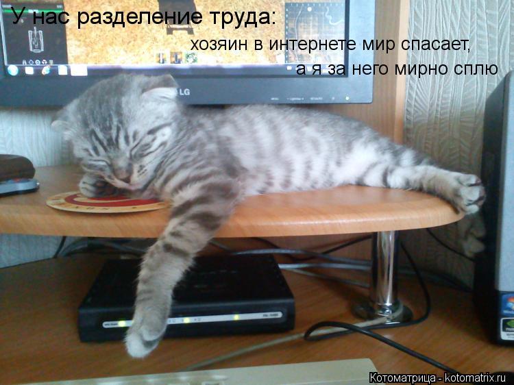 Котоматрица: У нас разделение труда: хозяин в интернете мир спасает, а я за него мирно сплю