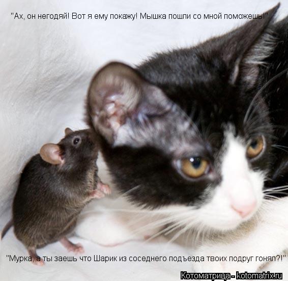 """Котоматрица: """"Мурка, а ты заешь что Шарик из соседнего подъезда твоих подруг гонял?!"""" """"Ах, он негодяй! Вот я ему покажу! Мышка пошли со мной поможешь!"""""""