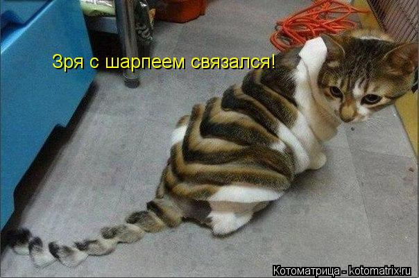 Котоматрица: Зря с шарпеем связался!