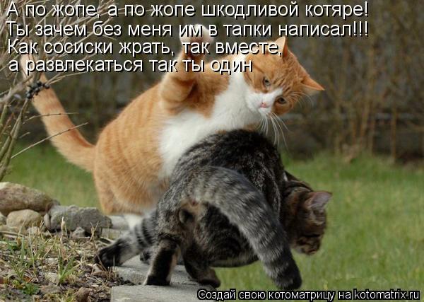 Котоматрица: А по жопе, а по жопе шкодливой котяре!  Ты зачем без меня им в тапки написал!!! Как сосиски жрать, так вместе , а развлекаться так ты один