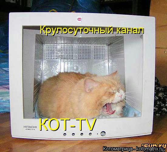 Котоматрица: Крулосуточный канал КОТ-TV