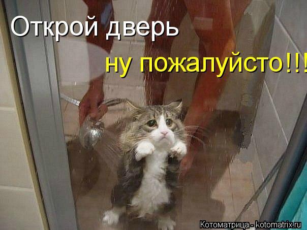 Котоматрица: Открой дверь   ну пожалуйсто !!!!