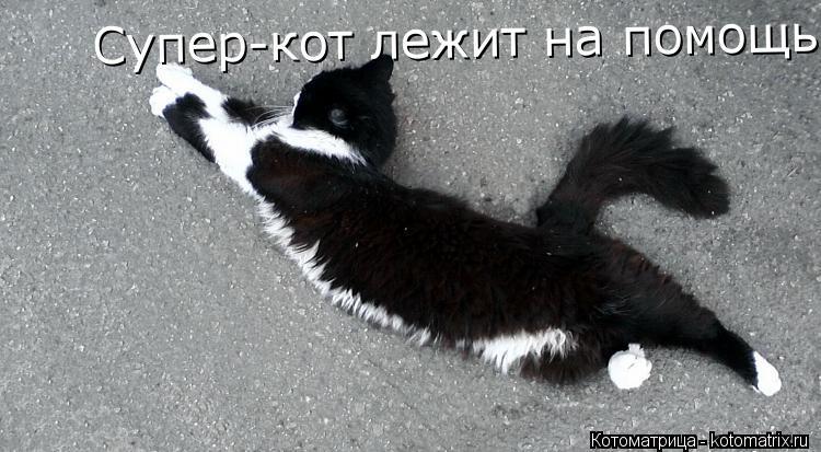 Котоматрица: Супер-кот лежит на помощь Супер-кот лежит на помощь