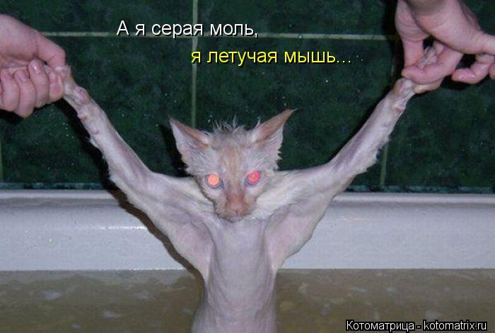 Котоматрица: я летучая мышь... А я серая моль,