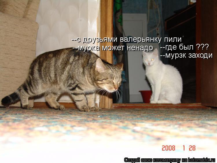 Котоматрица: --где был ??? --с друзьями валерьянку пили  --мурзк заходи  --мурка может ненадо