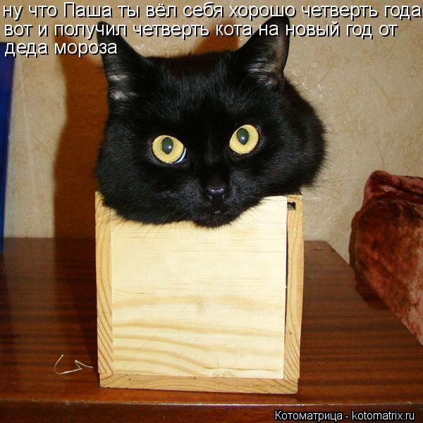 Котоматрица: ну что Паша ты вёл себя хорошо четверть года, вот и получил четверть кота на новый год от деда мороза