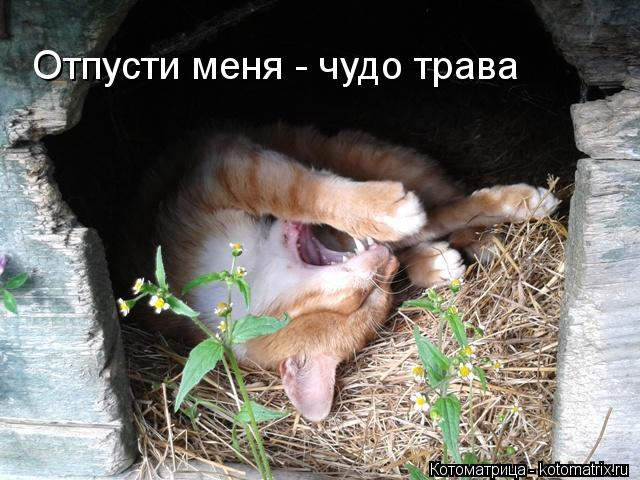 Котоматрица: Отпусти меня - чудо трава