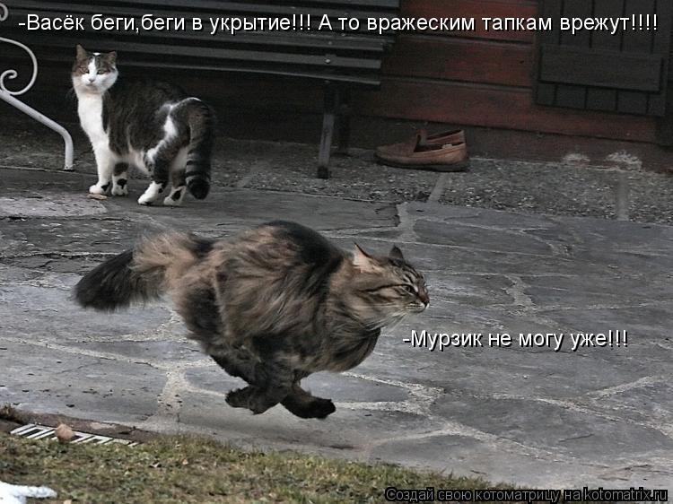 Котоматрица: -Васёк беги,беги в укрытие!!! А то вражеским тапкам врежут!!!! -Мурзик не могу уже!!!
