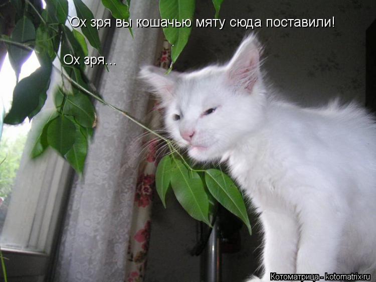 Котоматрица: Ох зря вы кошачью мяту сюда поставили!  Ох зря...