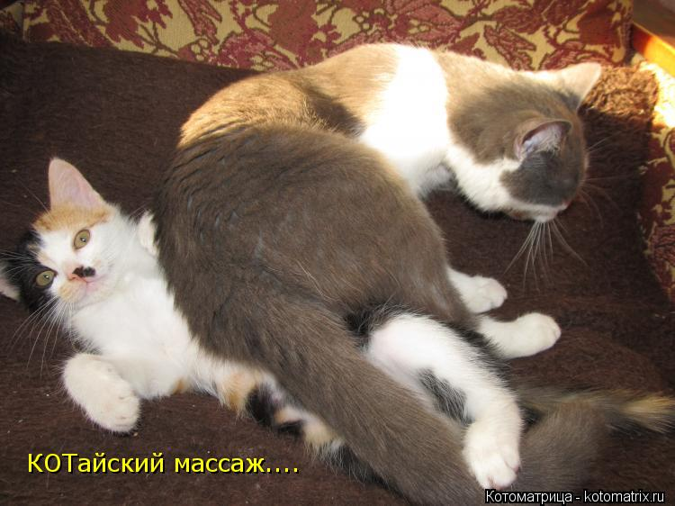 Котоматрица: КОТайский массаж....