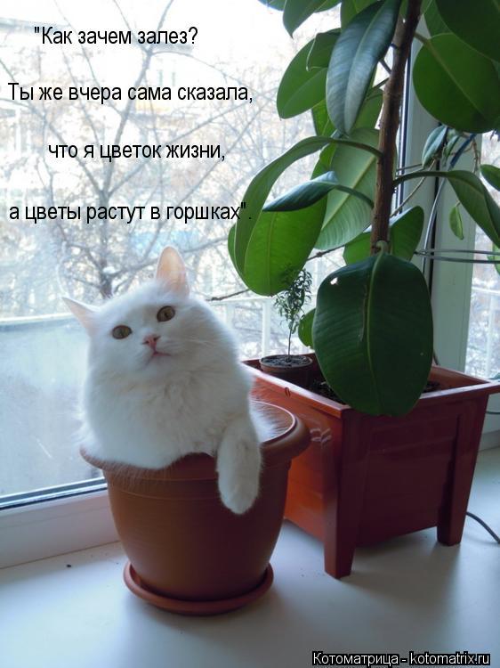 """Котоматрица: """"Как зачем залез?  Ты же вчера сама сказала,  что я цветок жизни,  а цветы растут в горшках""""."""