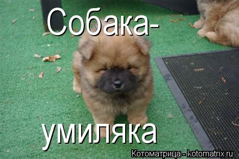 Котоматрица: Собака- умиляка