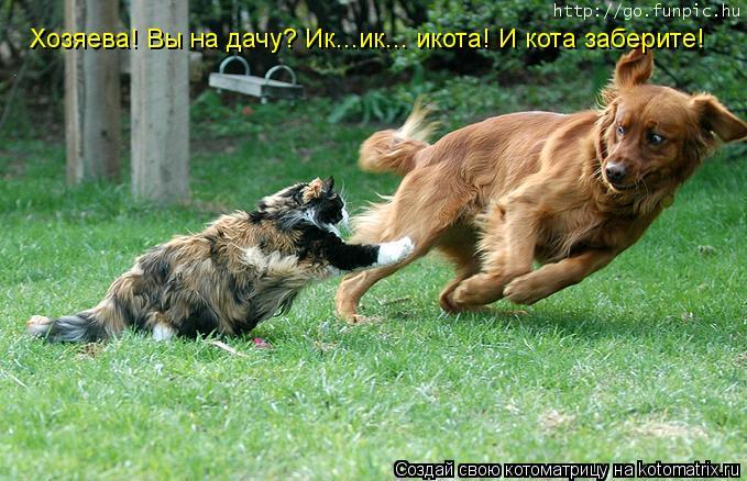 Котоматрица: Хозяева! Вы на дачу? Ик...ик... икота! И кота заберите!