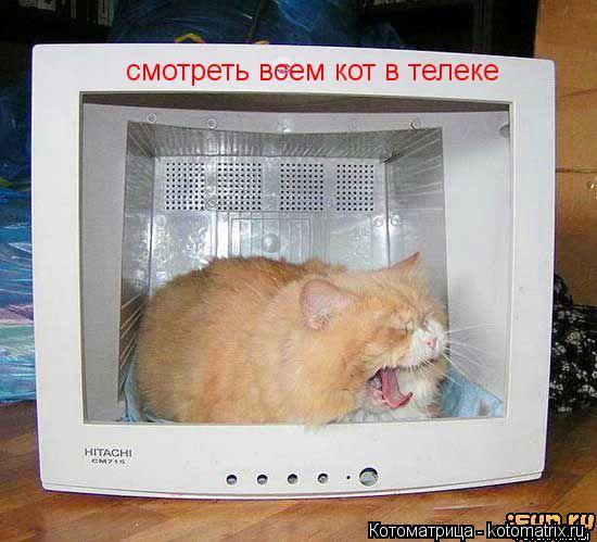 Котоматрица: смотреть всем кот в телеке