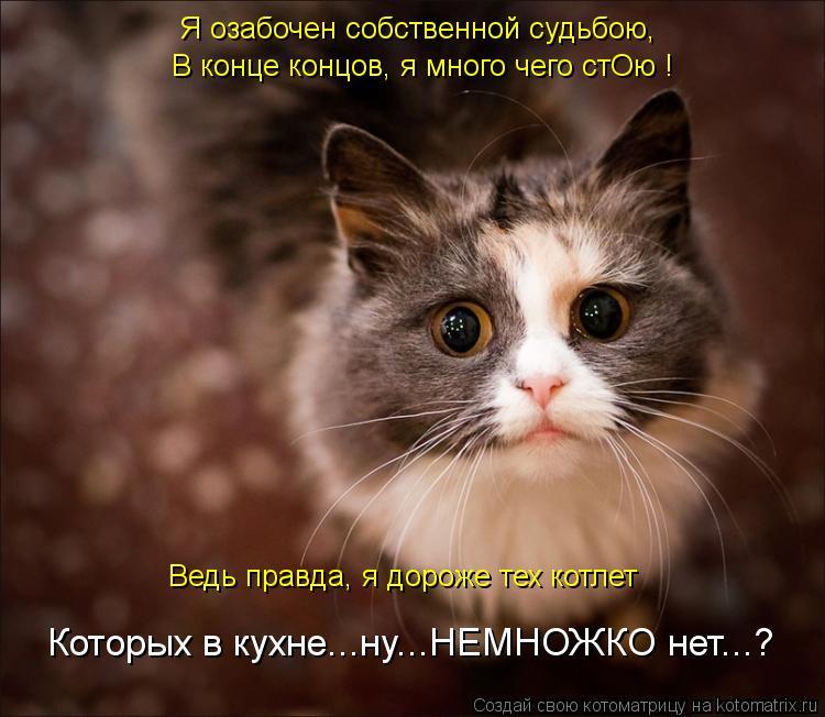 Котоматрица: Ведь правда, я дороже тех котлет Я озабочен собственной судьбою, В конце концов, я много чего стОю ! Которых в кухне...ну...НЕМНОЖКО нет...?