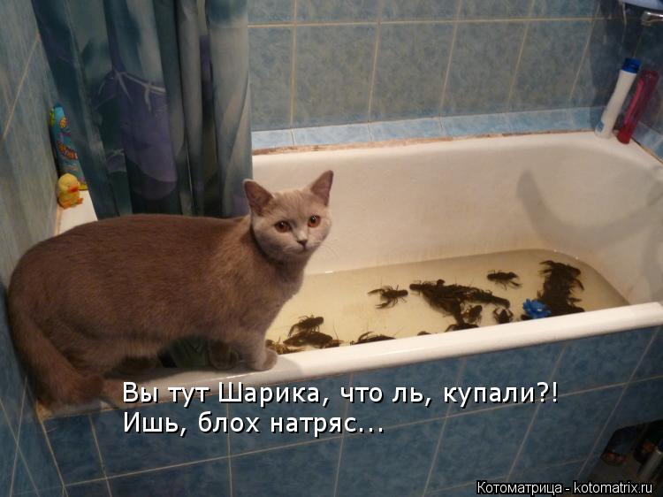 Котоматрица: Вы тут Шарика, что ль, купали?! Ишь, блох натряс...
