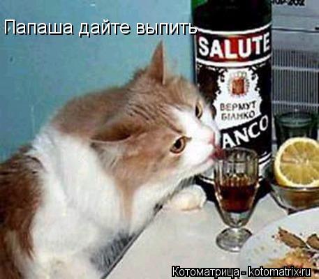 Котоматрица: Папаша дайте выпить