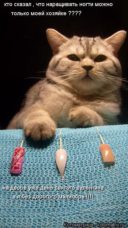 Котоматрица: кто сказал , что наращивать ногти можно  только моей хозяйке ???? на дворе уже день святого валентина  а я без дорогого маникюра !!!!