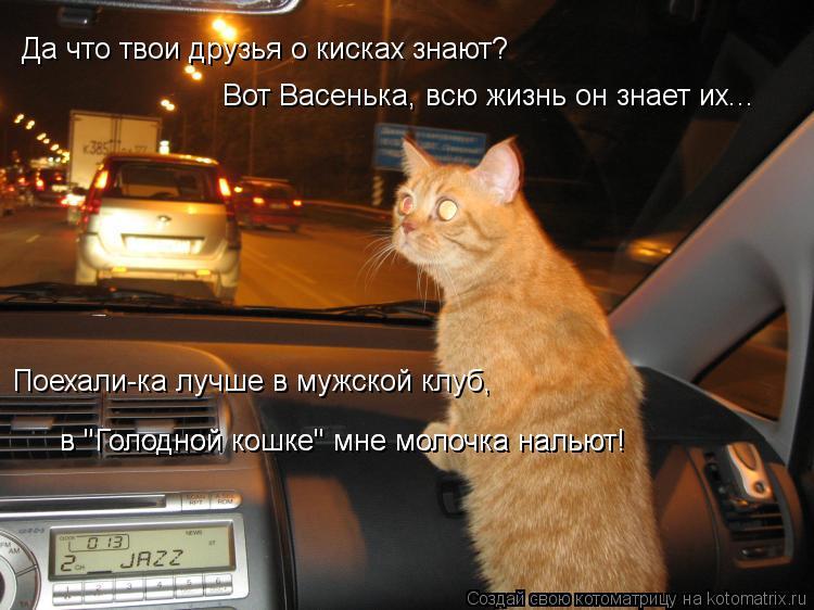 """Котоматрица: в """"Голодной кошке"""" мне молочка нальют! в """"Голодной кошке"""" мне молочка нальют! Поехали-ка лучше в мужской клуб, Да что твои друзья о кисках знаю"""