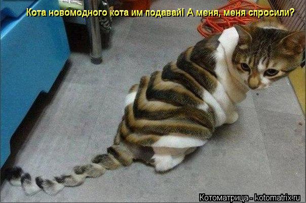 Котоматрица: Кота новомодного кота им подавай! А меня, меня спросили?   Кота новомодного кота им подавай! А меня, меня спросили?