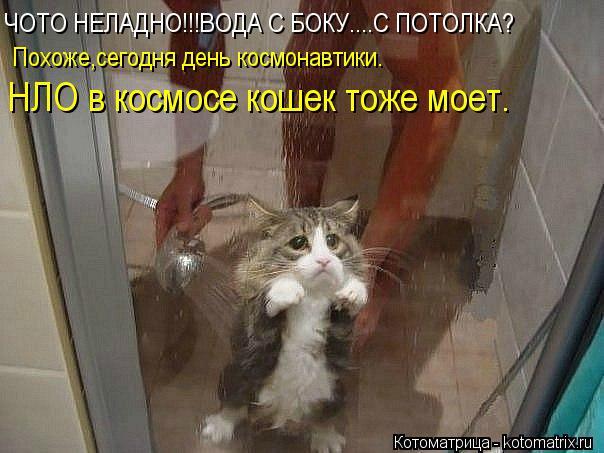 Котоматрица: ЧОТО НЕЛАДНО!!!ВОДА С БОКУ....С ПОТОЛКА? Похоже,сегодня день космонавтики. НЛО в космосе кошек тоже моет.