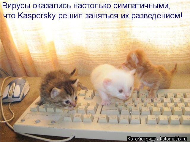 Котоматрица: что Kaspersky решил заняться их разведением! Вирусы оказались настолько симпатичными,