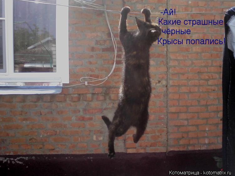 Котоматрица: -Ай! Какие страшные ,  чёрные Крысы попались!