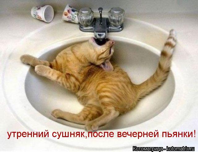 Котоматрица: утренний сушняк,после вечерней пьянки!