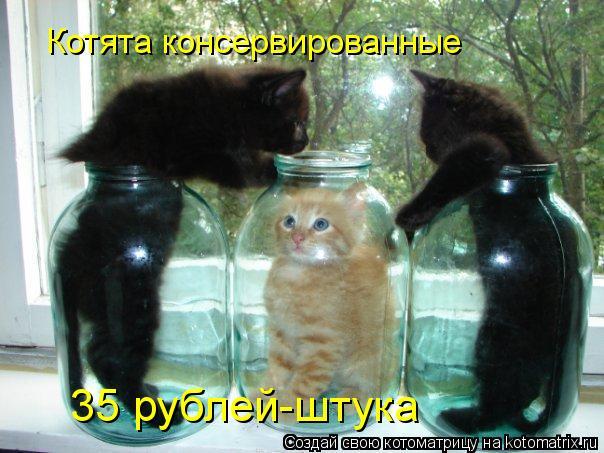 Котоматрица: Котята консервированные 35 рублей-штука