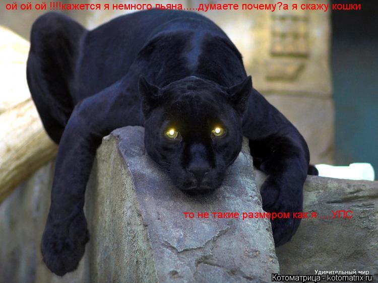 Котоматрица: ой ой ой !!!!кажется я немного пьяна.....думаете почему?а я скажу кошки  то не такие размером как я ....УПС