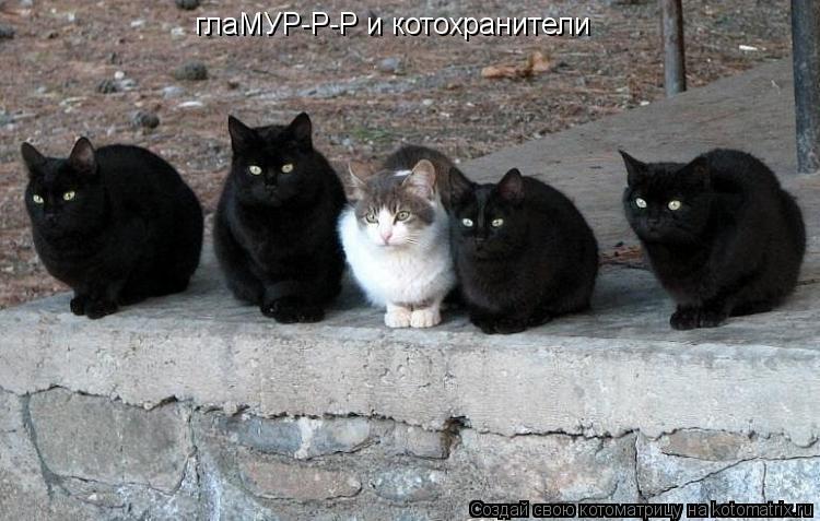 Котоматрица: глаМУР-Р-Р и котохранители